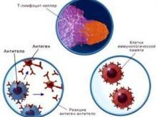Ученые: Иммунной системой можно командовать. Выходит, заговоры знахарей — не фокусы?
